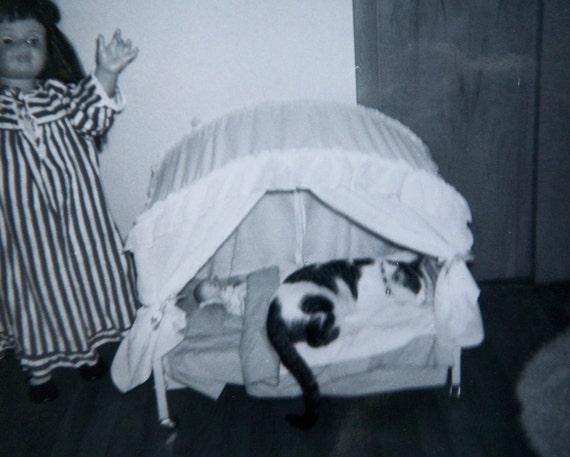 vintage photograph - sleeping kitty