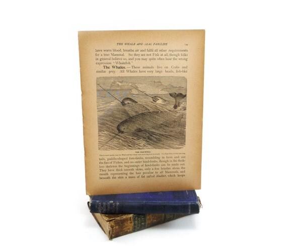 Narwal print - vintage frameable book page