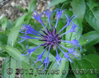 Star Burst Floral folded greeting card