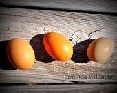 Dinner For Maurice 8x10 photograph by Miranda Wildman FREE SHIPPING
