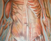 amazing full color medical illustration with fold-outs