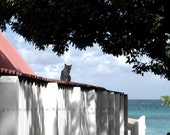 Caribbean Photography St. Barts Cat on roof_St Barts 11 X 14 Print_ Tropical Art Print _ St. Barth