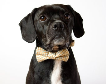 Citrus Plaid Bow Tie Dog Collar