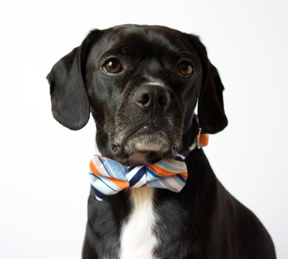 Nautical Stripes Bowtie Dog Collar