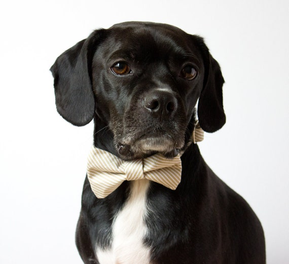 Oatmeal Seersucker Bow Tie Dog Collar