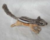 Blaise - Chipmunk Shoulder Pet