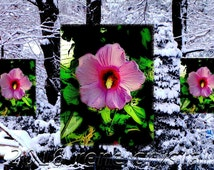Triple Pink Flowers Floral Snow Think Spring Photo 8 x 12