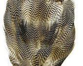 Speckled Duck Feather Pad