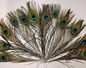 4 Peacock Feathers