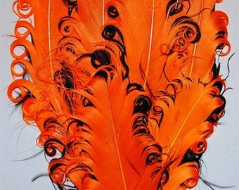 Orange and Black Nagorie Feather Pad
