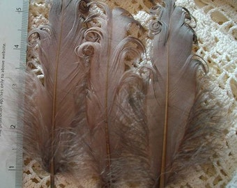 3 Loose Nagorie Feathers - Light Brown