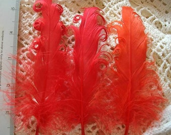 3 Loose Nagorie Feathers - Red