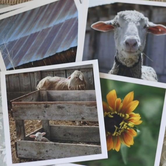 summer day - fine cards (and farm-fresh)