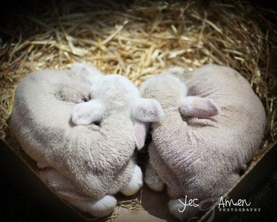 love you - fine lamb photography (and so farm fresh) 8x10 hard backed