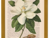 dictionary art vintage white MAGNOLIA floral print - vintage art book page print - FREE SHIPPING