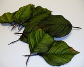 Silk Flowers - Leaves - 30 Green Hydrangea Leaves on Wired Stems in Two Sizes - Artificial Leaves