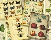 Scrapbooking Nature Book Plates ATC Printable Instant Download ACEO Backgrounds Vintage Digital Collage Sheet Eggs Owl Bee Butterfly Tag 153