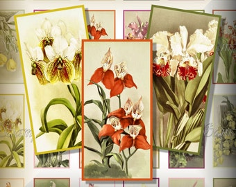 Vintage Orchids 1 x 2 Inch Dominoes Digital Collage Pendant Images Decoupage Magnets Keychains Printable Instant Download