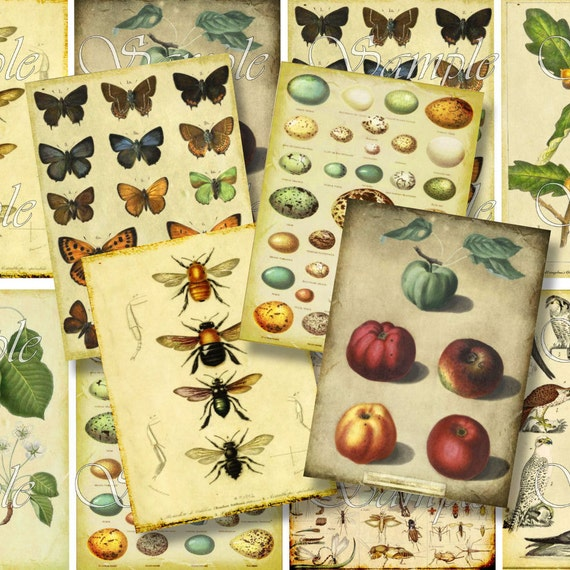 Scrapbooking Nature Book Plates ATC Printable Instant Download ACEO Backgrounds Vintage Digital Collage Sheet Eggs Owl Bee Butterfly Tag