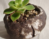 Handbuilt Stoneware Planter Pot  for Cactus, Succulent, Bonsai or Indoor Rock Garden