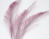 Peacock Swords - Dark Pink