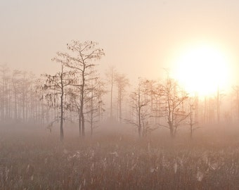 Photograph - Big Sunrise at Big Cypress - 8 x 12
