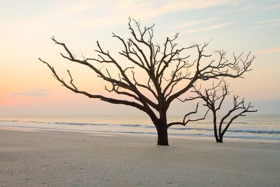 Photograph Trees at Botany Bay 8 x 12