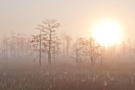Photograph - Big Sunrise at Big Cypress - 8 x 12