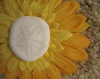 Summer Yellow gerber daisy Sand dollar Hair clip