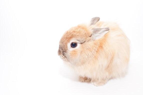 cute dwarf rabbit photo print for Merry Wren