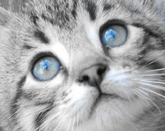 Kitty Blue Eyes Animal Cat Wall Art Home Decor Baby Nursery Digital Download Wall Art Decor Fine Art Photography
