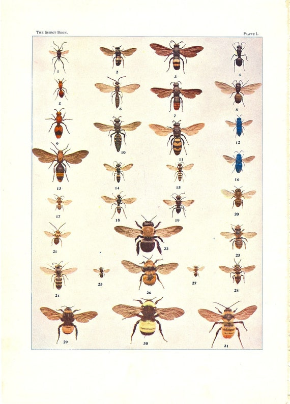 Antique Insect Paper Print of Bees and Ants