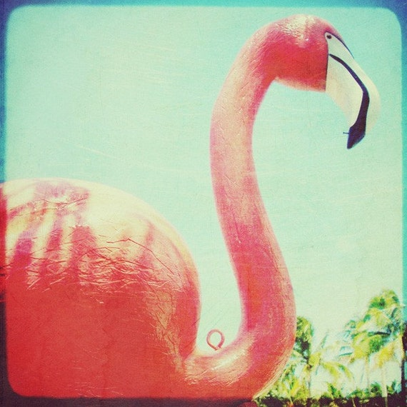 Ap english essay pink flamingos
