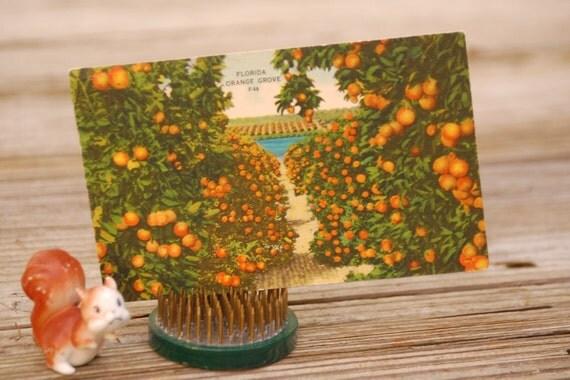 Vintage Florida Postcard, orange grove