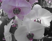 Orchid Set - Five 8x10 Fine Art Photographs