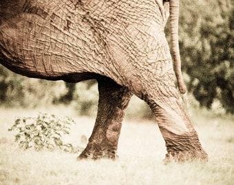 Elephant's Bottom - Fine Art Photography - Wall Décor - Nature Photography