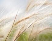 Photo of Wheat in Wind - Fine Art Photo Entitled Wind's Sigh  - 8 X 12