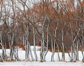Photo of Snow on Fronts of Trees - Fine Art Photo Entitled Windsocks - 12 X 18
