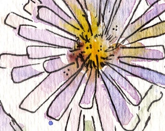 Pacific Aster - Watercolor Print