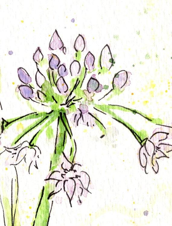 Sierra Onion - Watercolor Print