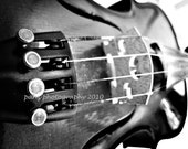 Photography Art- Set of Three 5x7 Violin Photos