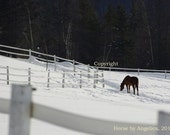 5x7 Country Horse Art Photography Print by Angelica