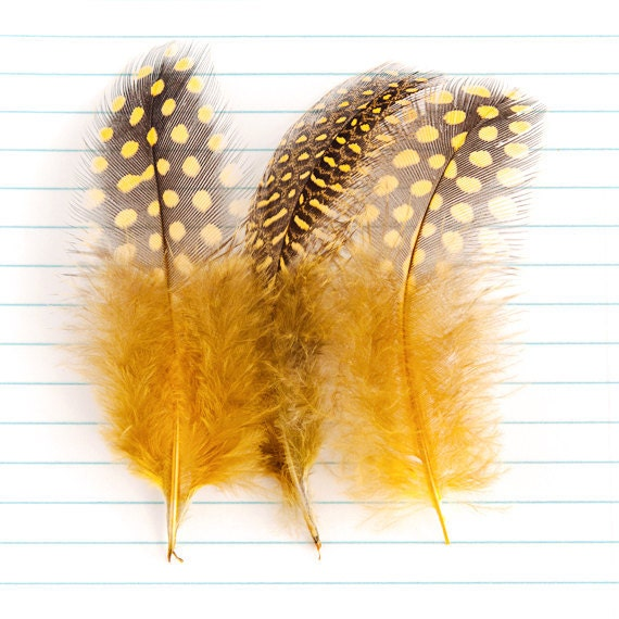 Guinea Craft Tail Feathers - Leopard Mustard Yellow / Black (8.5 - 10cm) x 6