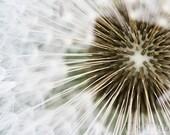 Seeds - Fine Art Photograph