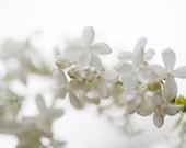 White, white, white Postcards - Fine Art Photograph