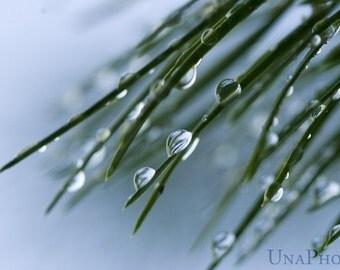 Tears - Fine Art Photograph