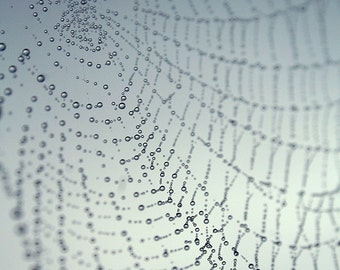 Morning dew dots in Spider Web - Fine Art Photograph