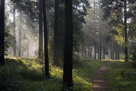 Enchanted Forest Postcards - Fine Art Photograph