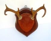 Mounted Deer Antlers - Woodland Deer Plaque - 6 Point Buck - Rustic Cabin Decor Brown