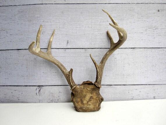 Deer Antlers - 8 Points -  Woodland Rustic Cabin Decor